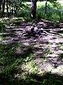 FLT M05 3.01 mi - Bivouac area near Peet Hill Rd - panoramio.jpg