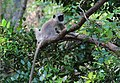 FLora and fauna of Chinnar WLS Kerala (38).jpg