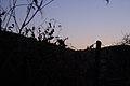 FOREST TWILIGHT (2011-11-07 18-34) - panoramio.jpg