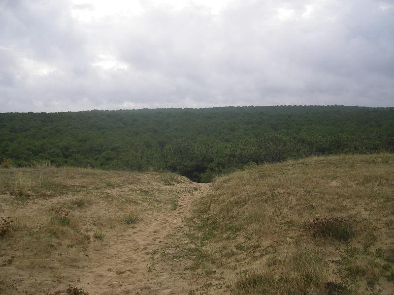 File:FR-40-Lit-et-Mixe Forest.JPG