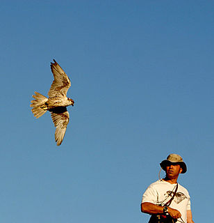 Falconry Hunting with a trained bird of prey