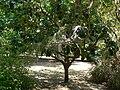 Fale - Giardini Botanici Hanbury in Ventimiglia - 536.jpg