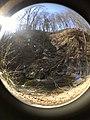 Fall Run Park in Shaler Township, late winter - 40.jpeg