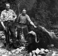 Far og sønn Stølen med moskusoksen som drepte en mann i Oppdal (1964) (19069104163).jpg