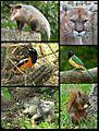 Fauna del Parque Nacional El Avila.jpg