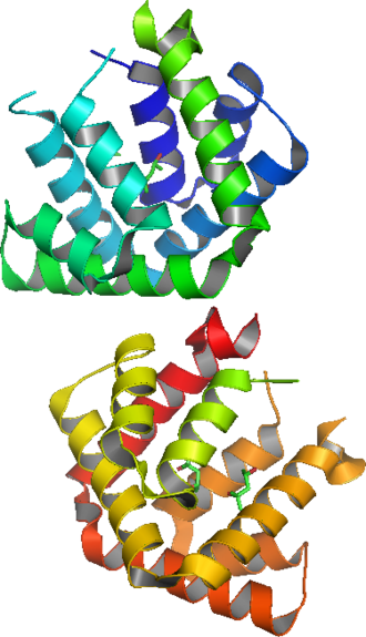 Fel d 1 - Crystallographic structure of the Fel d 1 dimer, the primary allergen present in cat saliva.