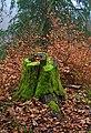 Felsenegg-Kante Tree Stump Autumn.jpg