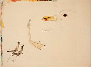 Three Bird Legs and Common Gull