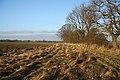 Field margin near Trees Farm - geograph.org.uk - 1092108.jpg