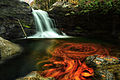 Fiery-autumn-waterfall - Virginia - ForestWander.jpg