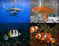 Fish-coll002.jpg