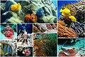Fish-collage-1502406.jpg