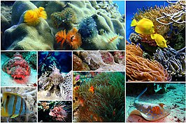 Fish-collage-1502406.jpg