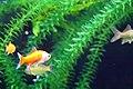 Fish (512677836).jpg