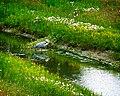 Fishing In A Ditch (5617500545).jpg