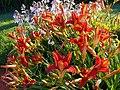 Fleurs - panoramio - Mario Hains.jpg