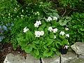 Flickr - brewbooks - Our Garden - May, 2008 (17).jpg