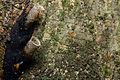 Flickr - ggallice - Stingless bees (1).jpg