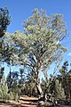 Flinders Ranges SA 5434, Australia - panoramio (139).jpg