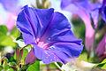 Flor (3751756483).jpg