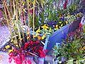 Flora of Esino Lario 9.jpg