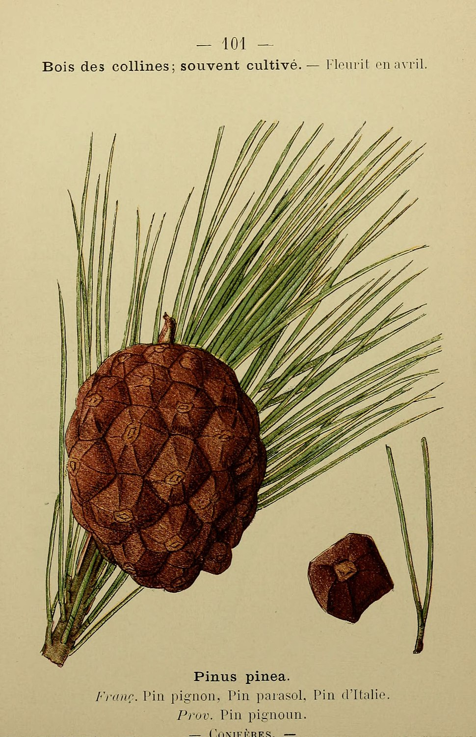 Flore coloriée de poche du littoral méditerranéen de Gênes à Barcelone y compris la Corse (6244470640)
