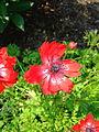 Flower-center135001.jpg