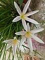 Flower.13.jpg