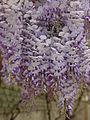 Flower 04377 n.JPG