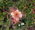 Flower in france.jpg