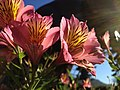 Flowers (6212941502).jpg
