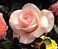 Flowers - Uncategorised Garden plants 253.JPG
