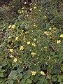 Flowers - panoramio (41).jpg
