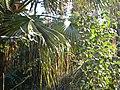 Foliage (3354674663).jpg