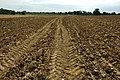 Footpath across a ploughed field - geograph.org.uk - 1386337.jpg