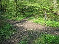 Footpath junction in Cockney's Wood - geograph.org.uk - 1255968.jpg