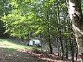 Forêt d'Esnazu 2.jpg