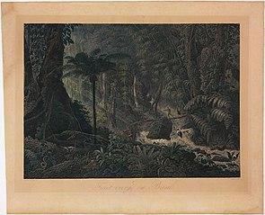 Forêt vierge du Brésil