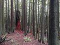 Forest - panoramio (67).jpg