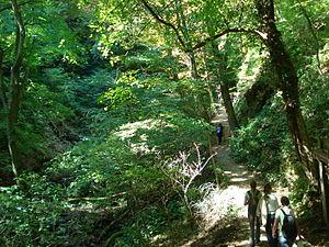 Medvednica - Forest, Park Medvednica, Croatia.