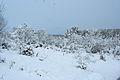 Forest near Ob river in Altai Region 07.JPG