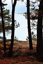 Forest on Femöre, Sweden II.jpg