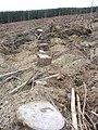 Forestry clear fell - geograph.org.uk - 535292.jpg