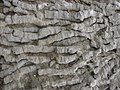 Fossilised Coral near Ogmore-by-Sea in Wales 3.jpg