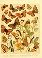 Fr. Berge's Schmetterlingsbuch nach dem gegenwärtigen Stande der Lepidopterologie neu bearb. und hrsg. von Professor Dr. H. Rebel (Plate 9) (6059074556).jpg