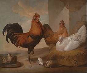 Domestic Cock, Hens, and Chick