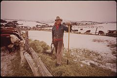 Frank Starbuck, Last of the Old Time Ranchers near Fairview Manages a Spread of 1300 Acres and 400 Head of Cattle. He Does It Alone Because It Is Too Difficult and Expensive to Get Help, 10-1972 (3815846294).jpg