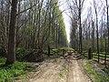 Fulsby Wood - geograph.org.uk - 418183.jpg