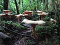 Fungi - Olympic National Forest - October 2017 - 2.jpg