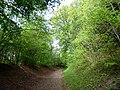 GOC Tring & Wendover Woods 061 Wendover Woods (34801695845).jpg